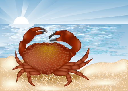 coastline: crab at sea. animal and coastline with sunset i