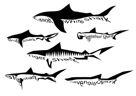 shark species. silhouette of sharks isolated on white Vector