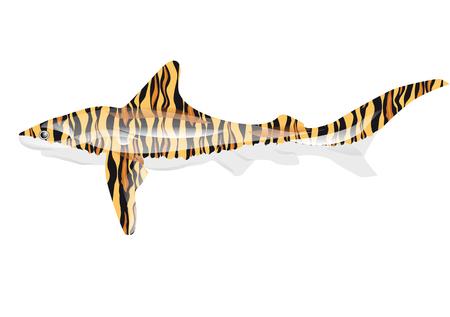 pez abstracto: tibur�n tigre. pescados abstractos isolted en blanco