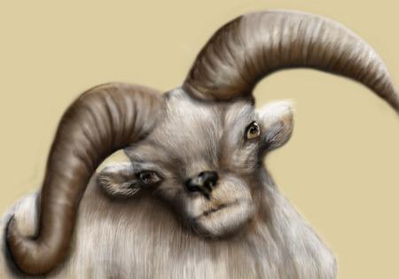 ruminant: dall sheep. portrait of a goofy looking dall sheep Stock Photo