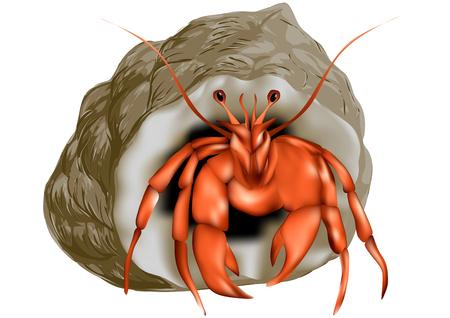 hermit: hermit crab isolated