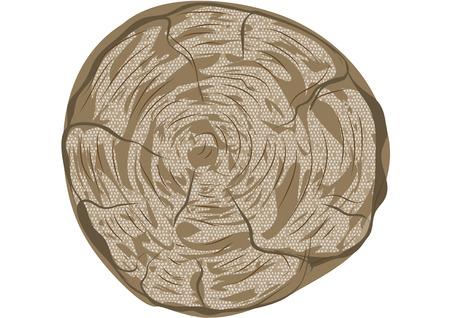 cut logs: anillos de los �rboles aislados en un fondo blanco Vectores