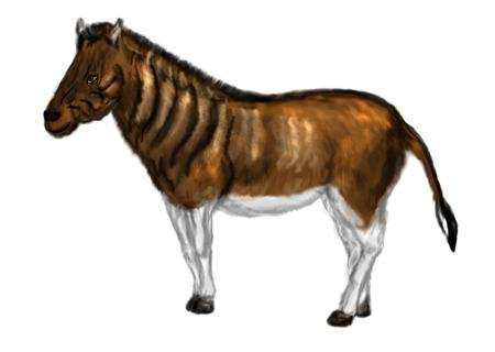 Equus quagga quagga. animal aislado en el fondo blanco Foto de archivo - 33987621