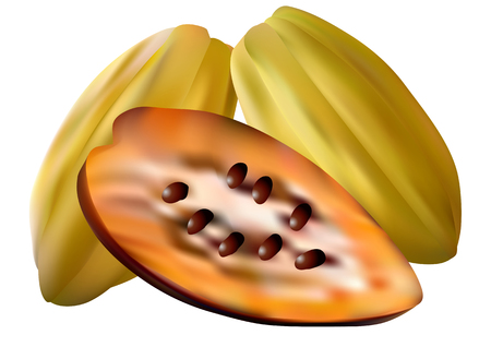 hull: cocoa pods isolated on a white background