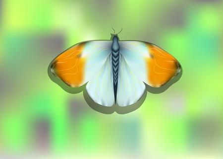 propina: mariposa punta naranja sobre fondo borroso abstracto Vectores