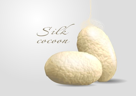 silk cocoon. two cocoon on gray background Ilustrace