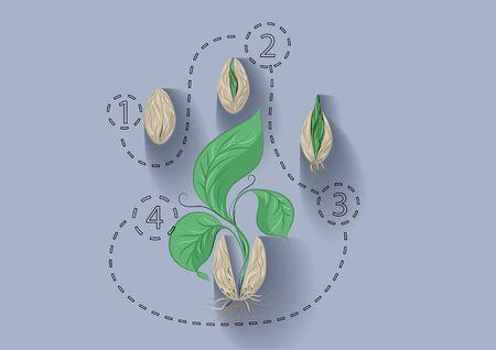 crecimiento planta: crecimiento de la planta. Plantilla abstracta con semillas y plantas Vectores