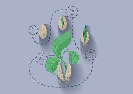 abstract seed: plant growth. abstract template with seed and plant Illustration
