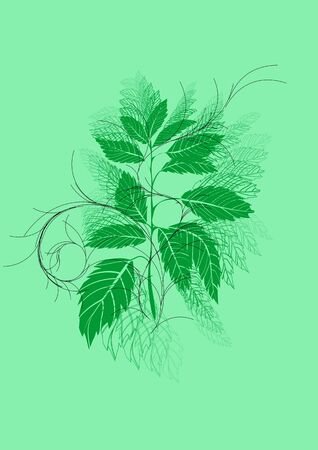 nettle: urtica. abstract herb isolated on green background
