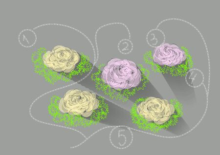 kale: kale garden. abstract floral infographic with plant of kale