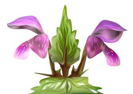flor aislada: lamium. flor aislado en un fondo blanco