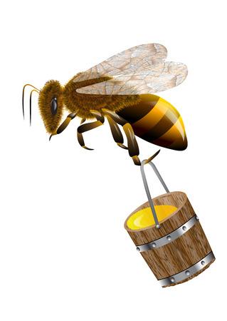 Abeja y la miel en bote aislado en blanco Foto de archivo - 43837760