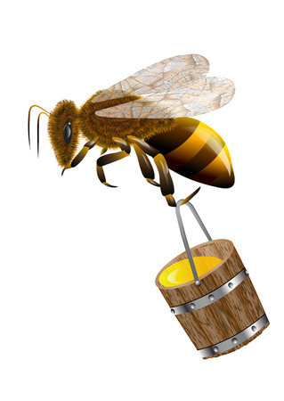 bee and honey in bucket isolated on white 向量圖像