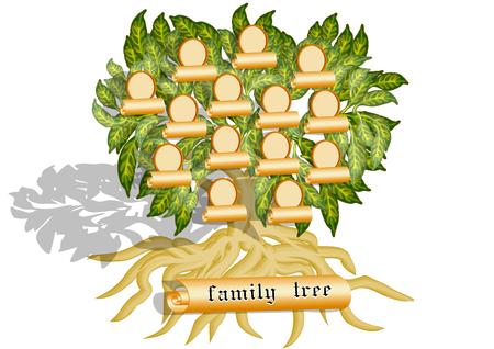 árbol genealógico: árbol aislado en un fondo blanco Vectores