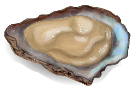 oyster: oyster on a white background.
