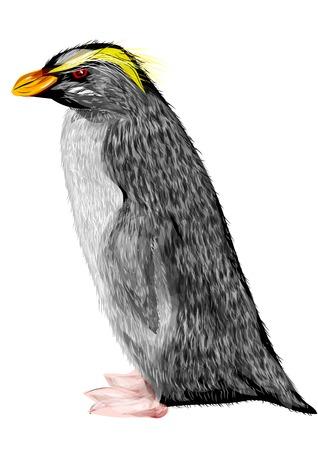 fiordland: Fiordland crested penguin