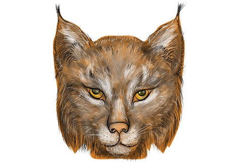 trot: Lynx isolated on a white background Illustration