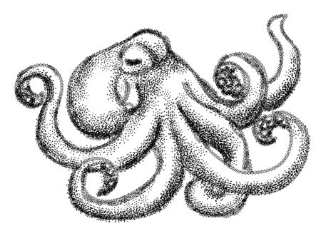 shellfish: octopus in black and white izolated on empty background