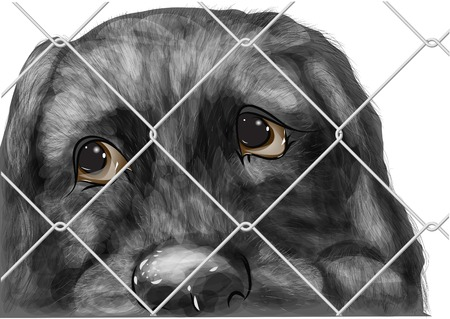 unwanted: adopt animal. shelter for homeless dogs, waiting for a new owner Illustration