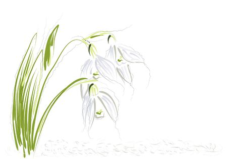 plant delicate: snowdrops. abstract flowers on a white background