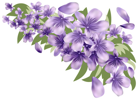 Lavender with leaves isolated on white background