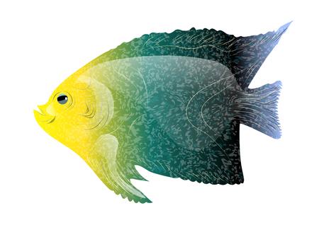 poissons tropicaux isolé sur un fond blanc