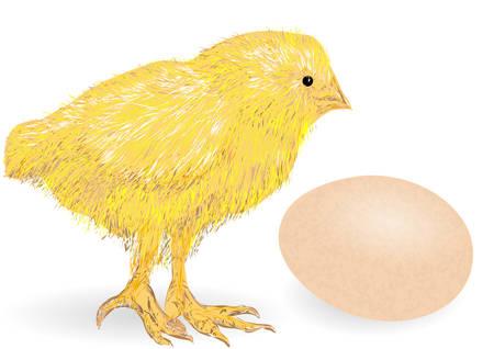 닭고기 animai와 흰색 배경에 계란