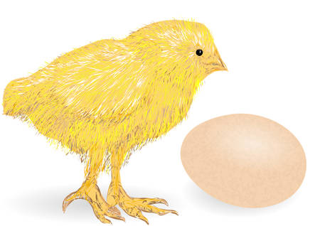 chuck: chicken animai and egg on white background
