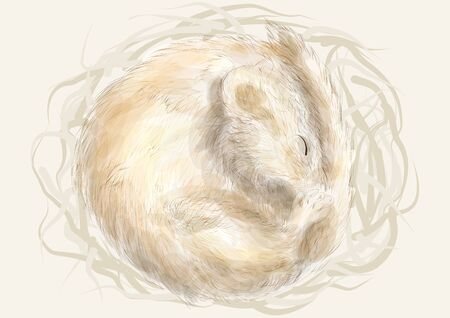 edible: Edible dormouse. animal sleeping in a nest