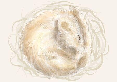 Edible dormouse. animal sleeping in a nest