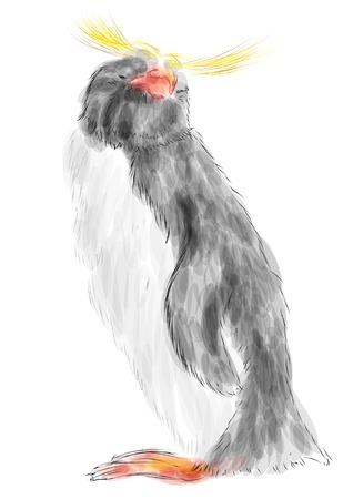 hair feathers: macaroni penguin isolated on white background