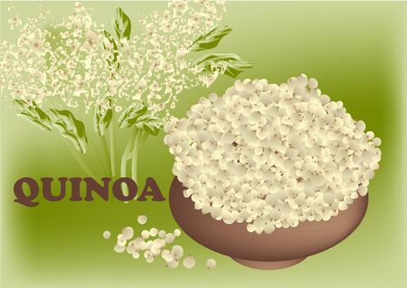 handful: quinoa plant and seed in brown bowl Illustration
