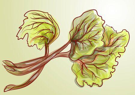 Rhabarber. Bunch von frischen Pflanze. Vektorgrafik