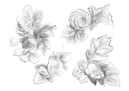 petal: Abutilon. set of flowers in black and white Illustration