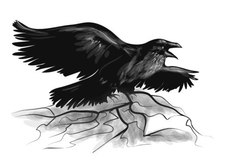 widespread: raven on white. raven with wide-spread wings black