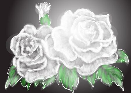 petal: white rose with green leaves on black