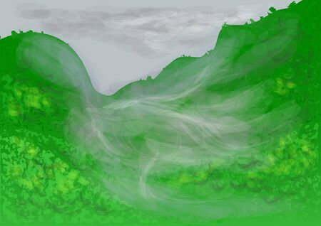 lush foliage: rainforest with cloud and morning dence fog