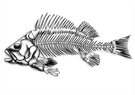 tail fin: black fish skeleton isolated on the white background Illustration