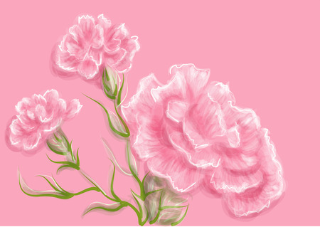 carnation. vector illustration of flowers on pink background