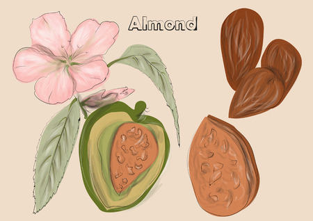 biege: almonds. nuts and flowers on biege background