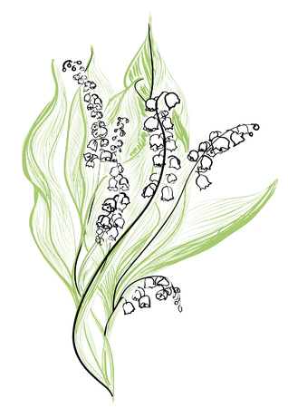 lily of the valley isolated on white backdrop