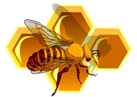 Beeswax and bee Macro, working bee on honey cells 일러스트