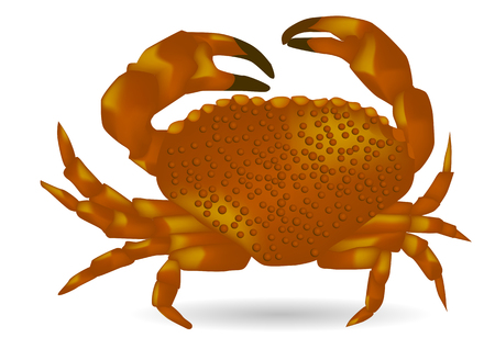 Sea ​​crab isolated on the white background