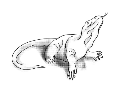 monitor lizard isolated on a white background