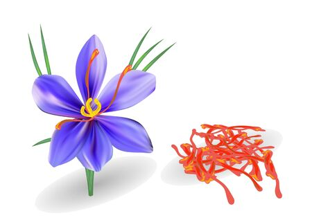saffron with flower isolated on a white background Çizim