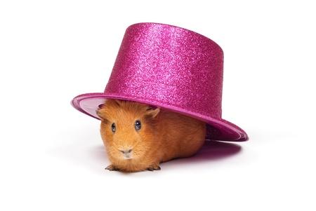 Cavia seduto sotto il cappello rosa Archivio Fotografico - 10906176