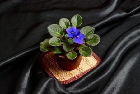 Viola in vaso di fiori su seta nera Archivio Fotografico - 10943253