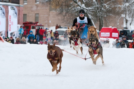 Dog sled cup in Russia. February 6, 2011
