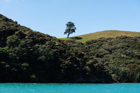 Solitary Tree - Beautiful bay of islands. New Zealand