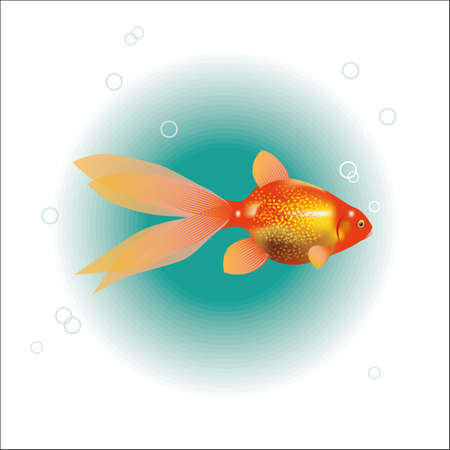 ichthyology: illustration of a goldfish.
